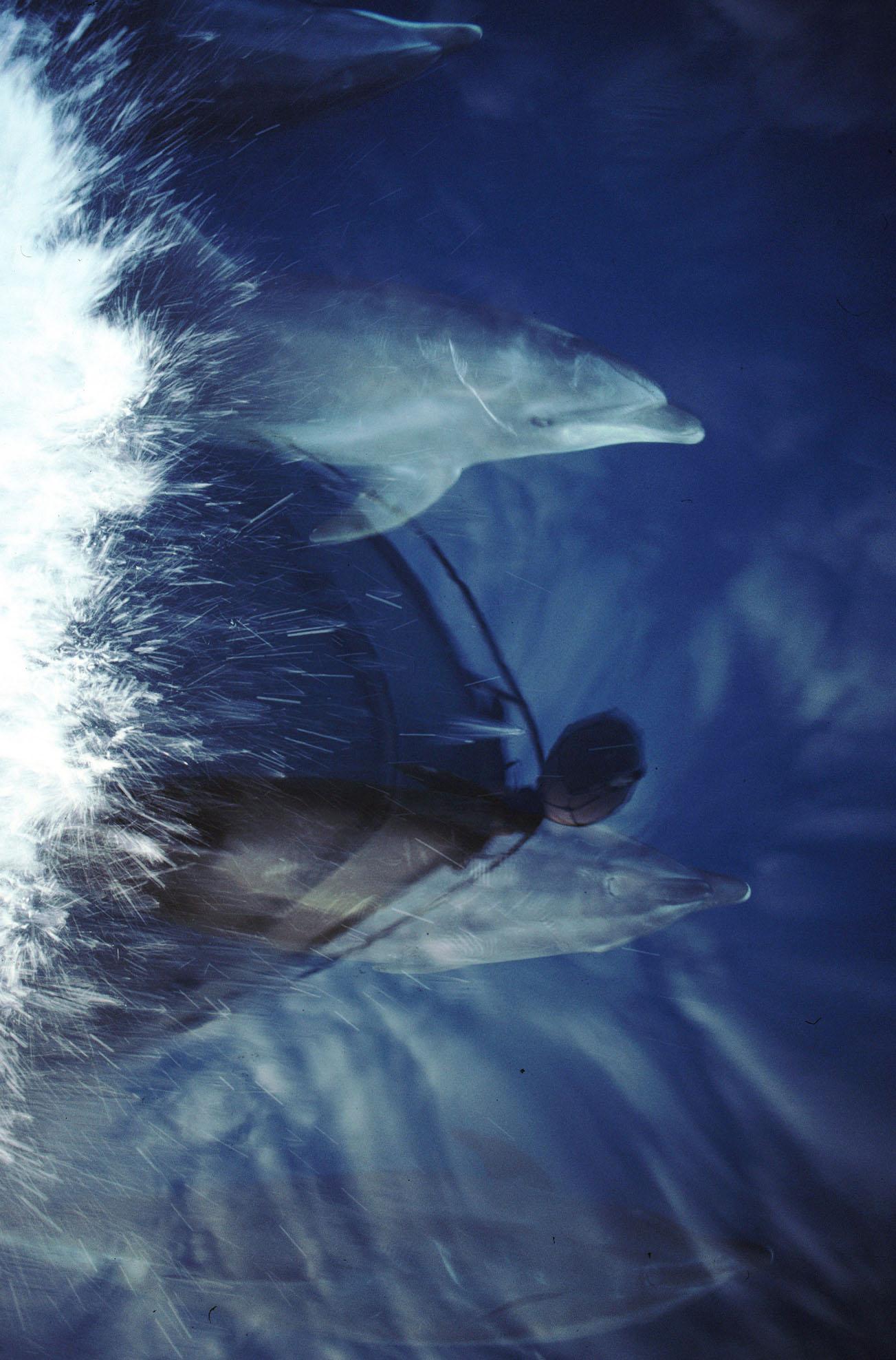 Rapsodia Blu: mostra fotografica di Luca Sonnino Sorisio, all'isola di Favignana, presso Ex Stabilimento Florio. Da venerdì 1 luglio, ore 10. La mostra rimarrà aperta fino al 30 settembre 2016